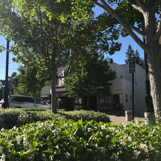 Downtown trees to be cut