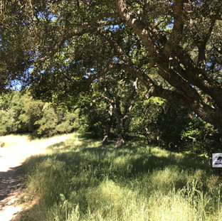 Reservoir Rim Trail