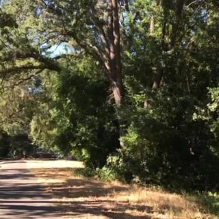 Riding north on Lafayette-Moraga Trail