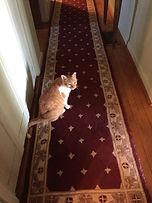 Charles kitty.jpg