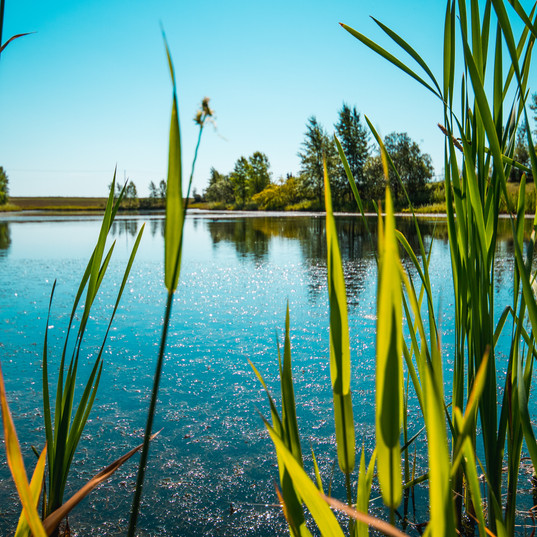 Ranchers Rise Wetland