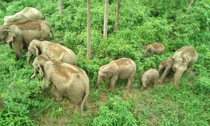 Elephants-at-Bardia-3-NT.jpeg