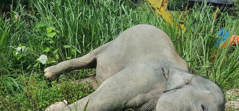 elephantdead_20210110123831.jpeg