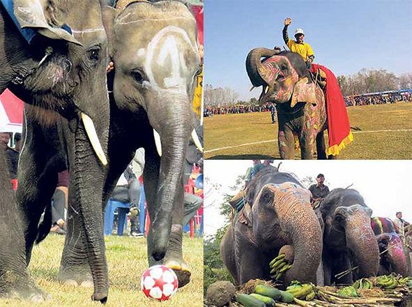 stop-elephant-abuse_20200129080319.jpeg