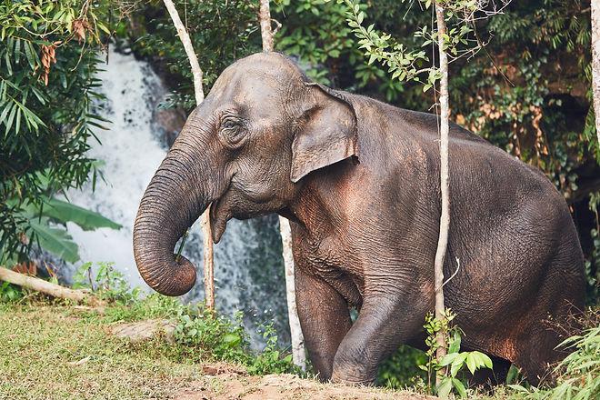 elephant-in-jungle-PX9AV68.jpg