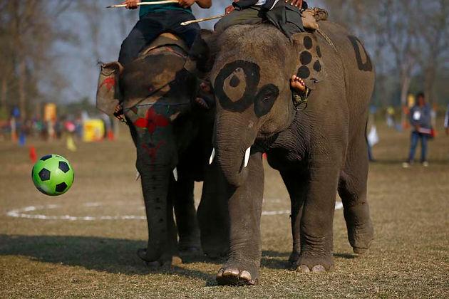 annual-international-elephant-festival-i