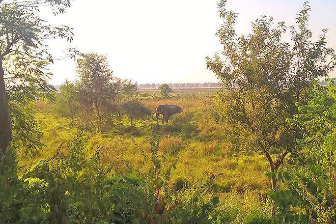 Koshi-Tappu-Wildlife-Reserve-elephant.jp