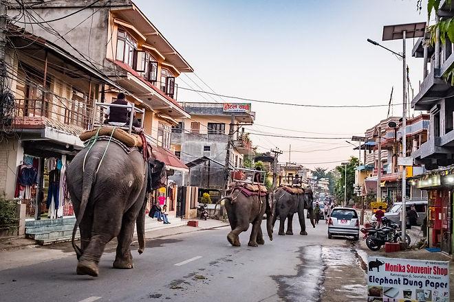 Set-the-elephants-free-NT-longread-1.jpe