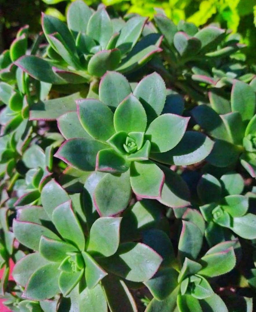 Planta .jpg