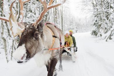 reindeer_ride.jpg