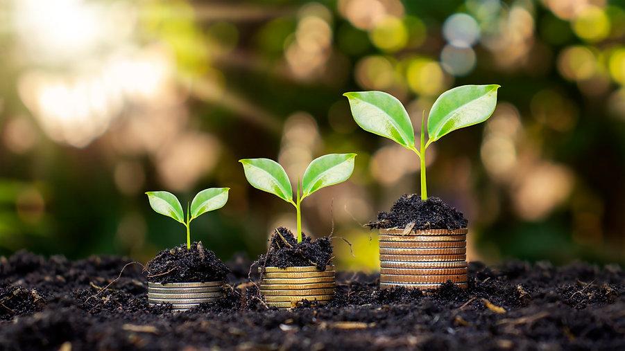 coins-plants-are-grown-pile-coins-finance-banking-idea-saving-money-increasing-finances.jp
