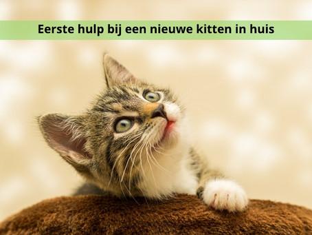 EHB de start voor je kitten