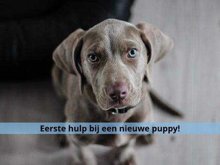 EHB een nieuwe puppy in huis!