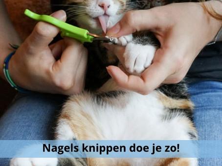 Het leren knippen van de nageltjes