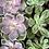 Thumbnail: Such a Succulent