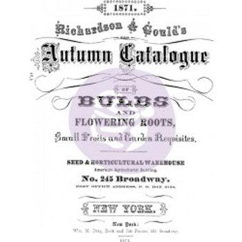 Autumn Catalogue Transfer