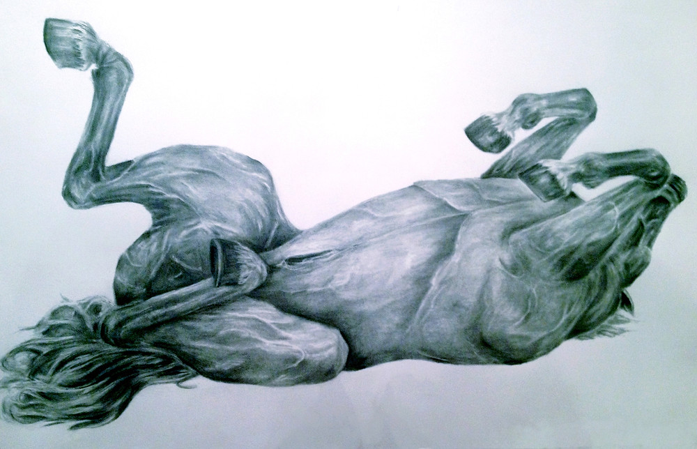 horse_rolling copy.jpg