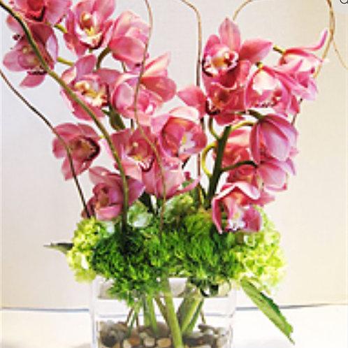 Large Orchids
