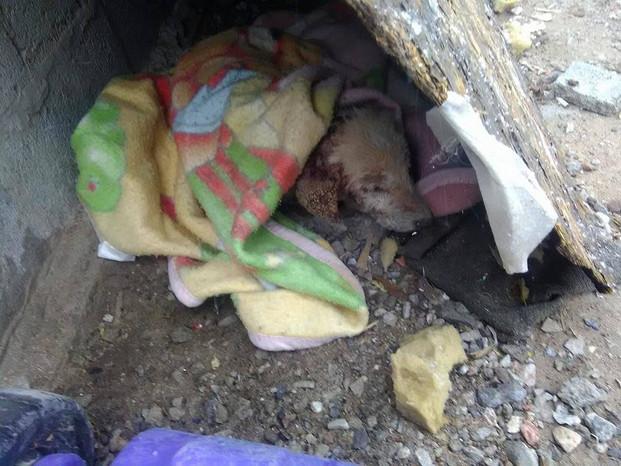 Homeless dog.jpg