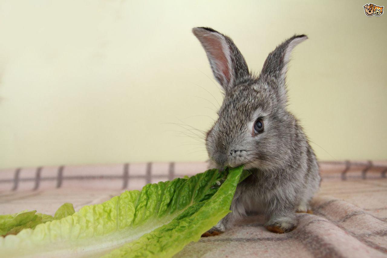 Rabbit Health Tips
