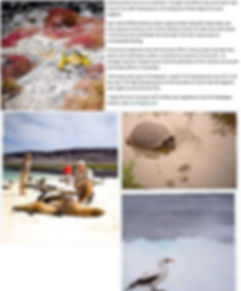 Life in Naples article page 2.jpg