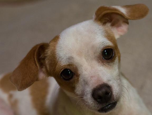 Please adopt me.jpg