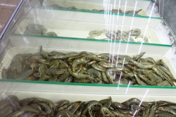 Shrimp Varieties