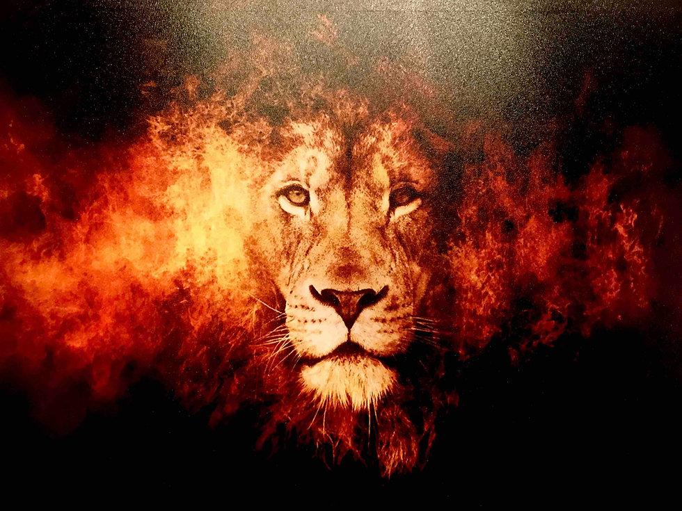 Frontline Lion Image.jpg