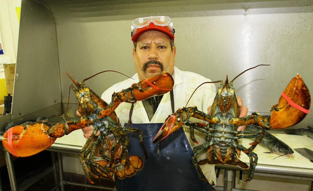 Fresh LIVE Lobster