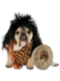 Costumes for Dogs.jpg