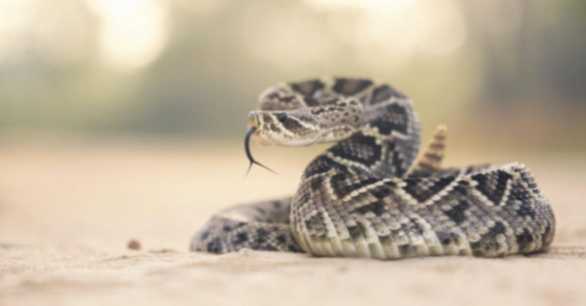 Rattlesnake Clinic.jpg