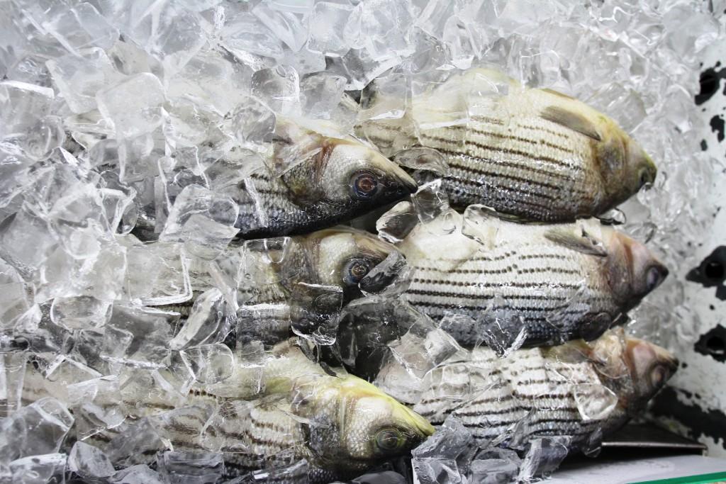 Seafood Row 4
