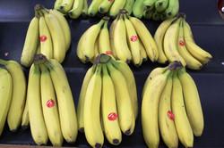 Fresh Banannas