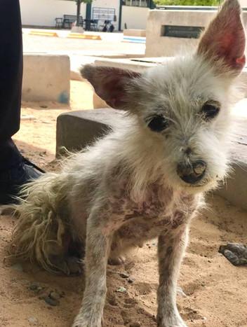 Palomita rescued