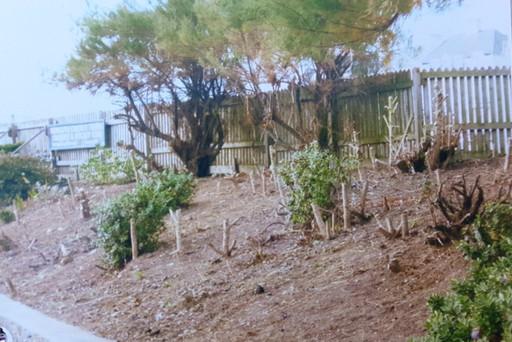 Garden 2 in 2007.jpg