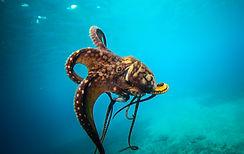 DayOctopus5.jpg
