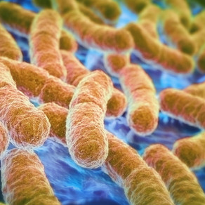"""Yo-yo dieting may be caused by altered """"gut microbes"""""""