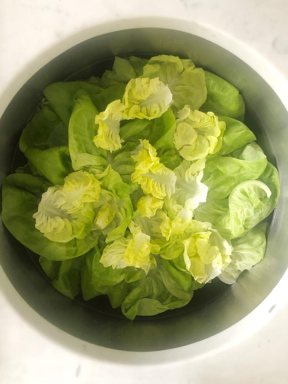Bibb/Butter Lettuce