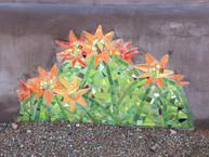 Blooming Barrel Cactus, 2012