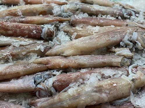 Loligo Squid (1 kg)
