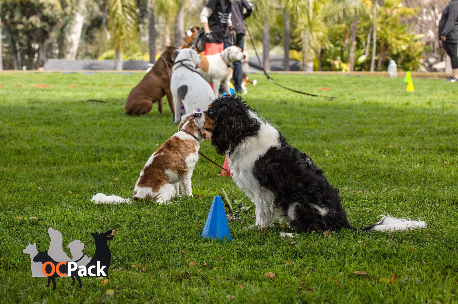 Canine Good Citizen Prep. - 1.5 Hours