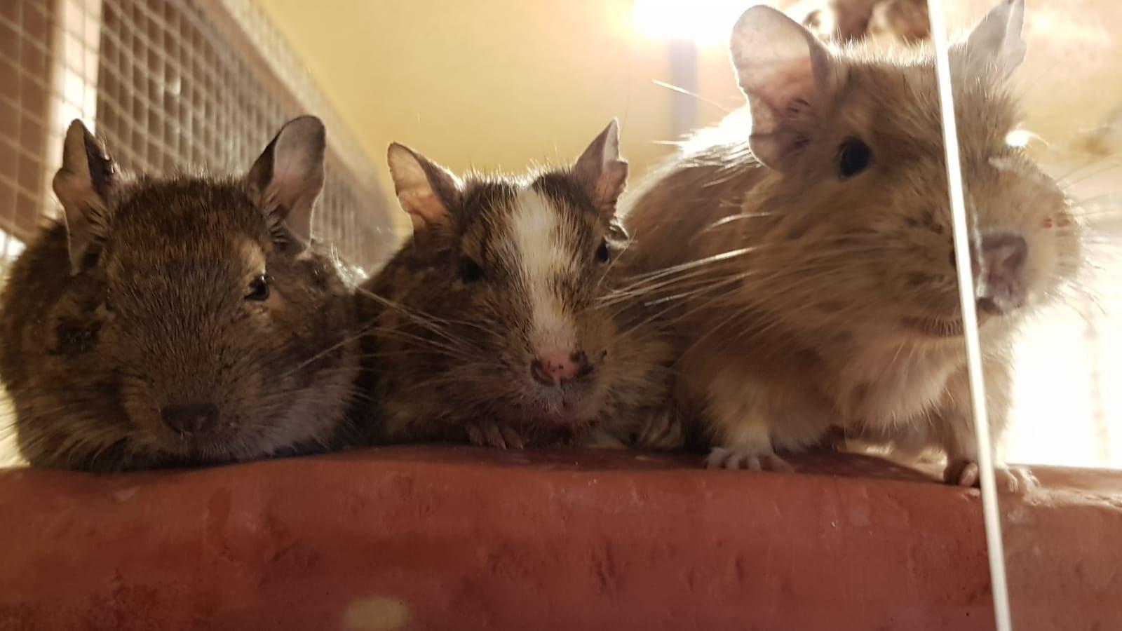 Wolfi mit seiner neuen Familie! Er ganz links!