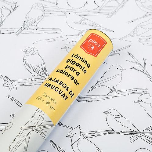 Pájaros de Uruguay para colorear