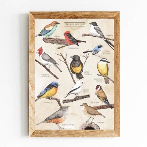 Cuadro Pájaros del sur