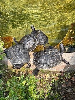 Turtle 8.jpg