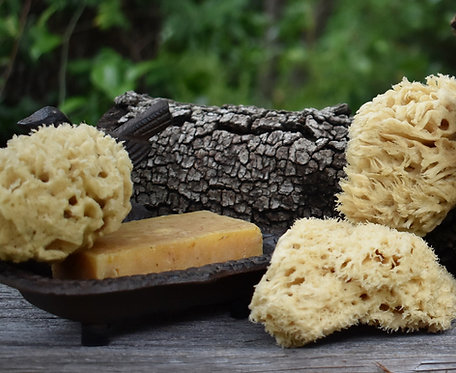 Atlantic Wool Sea Sponge