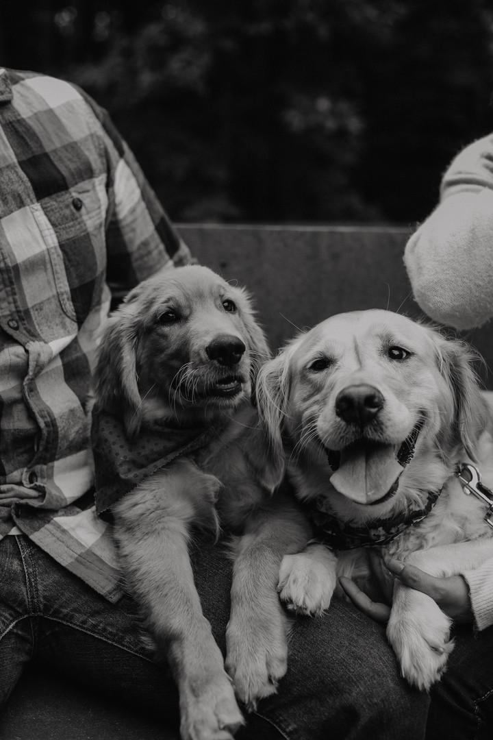 PuppyPhotos-8668-2.jpg