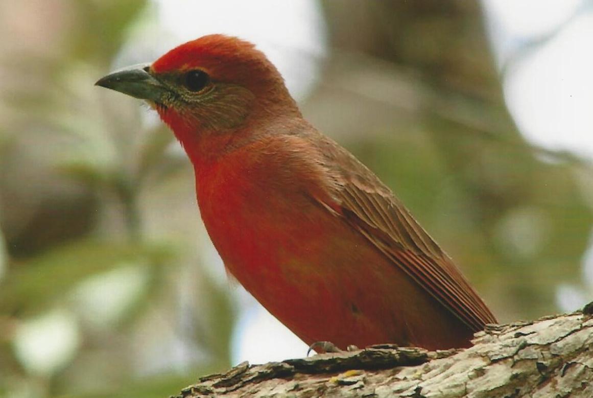 GC Bird
