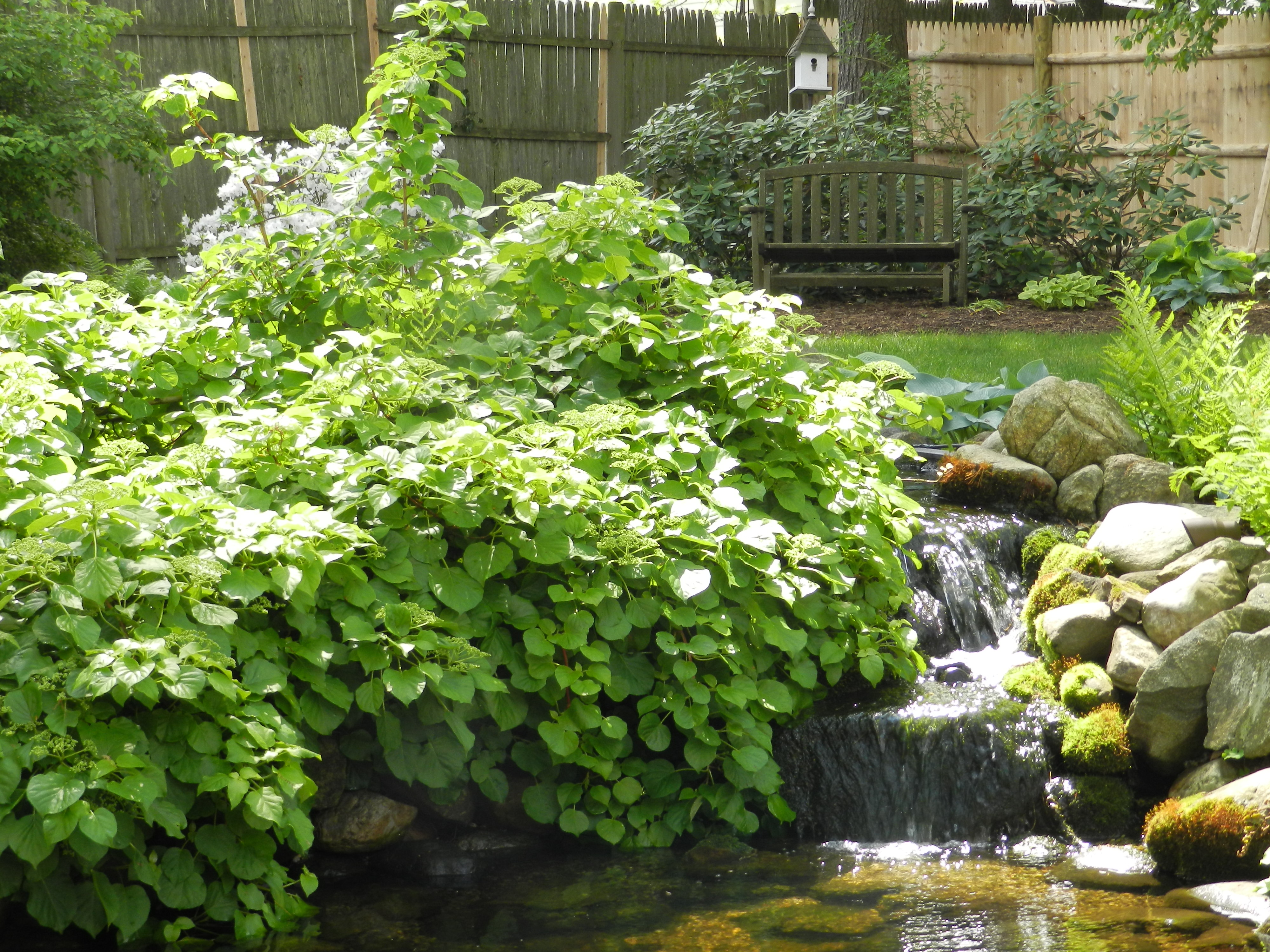 Member's garden