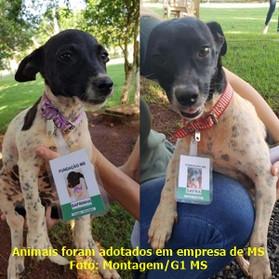'MÃE e FILHA', cadelas abandonadas em estrada são adotadas por instituição, mudam rotina e ganham at